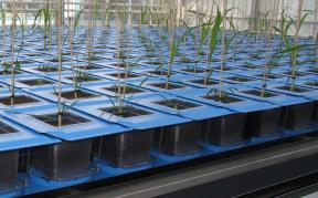 Wat voegt high-throughput phenotyping toe aan plant onderzoek?